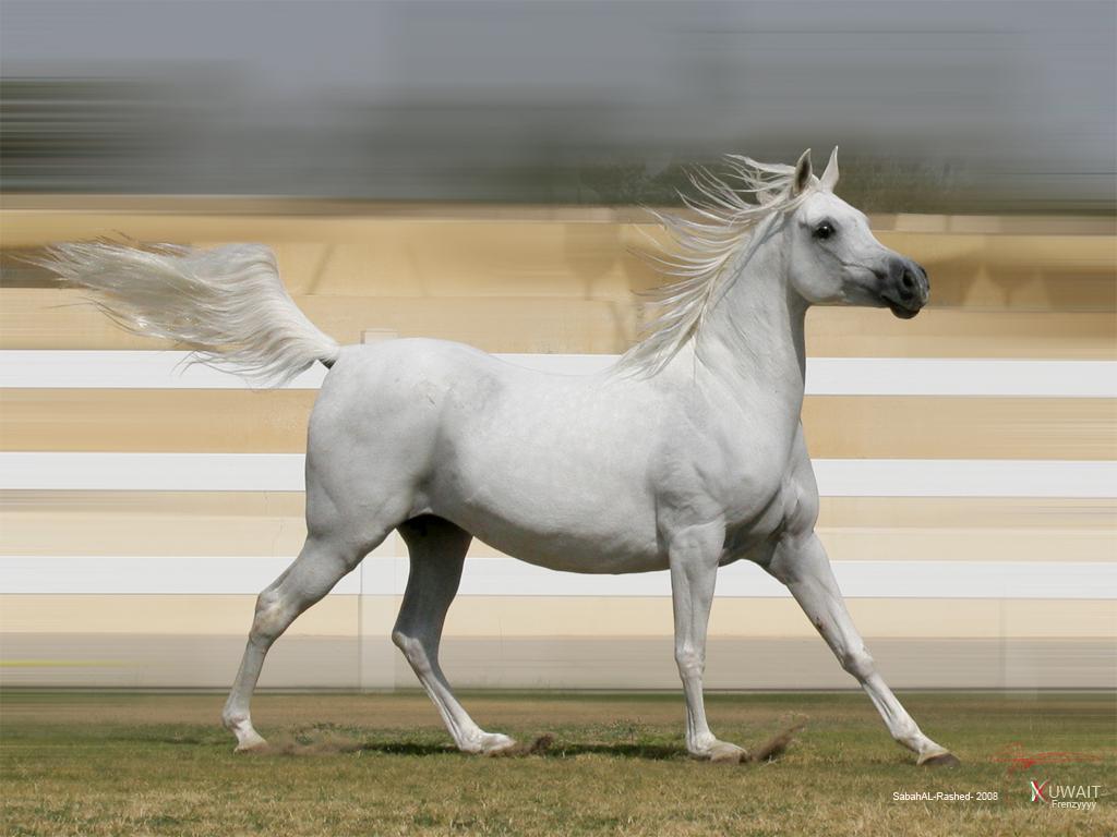 صور  أحصنة - صور خيل - صور خيل جميل